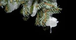 Ollis Weihnachtsgeschichte 2016 - Die dunkle Seite von Weihnachten